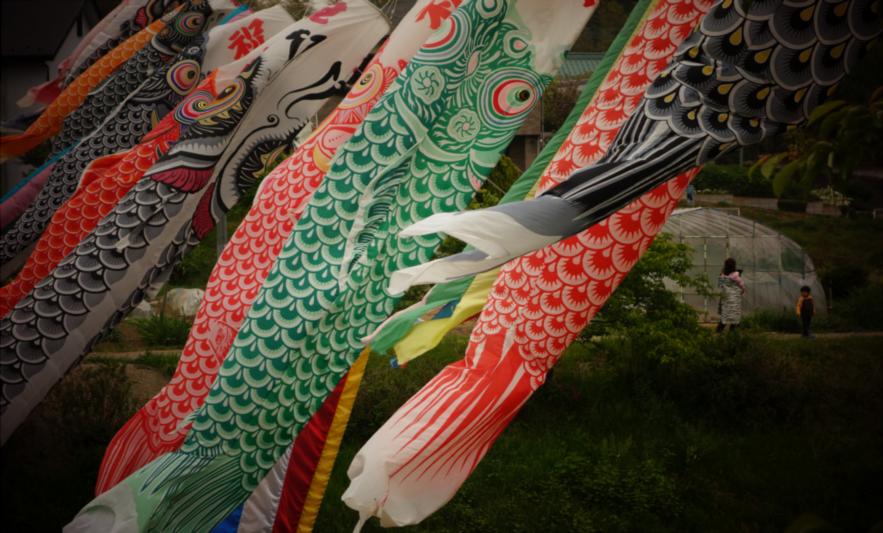 Immagine di Koi-nobori, pesci bandiera per festeggiare i bambini nel periodo della Golden Week.