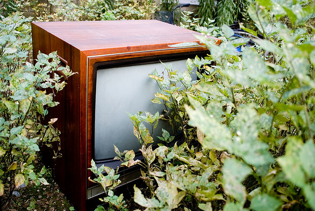 Television on a forest